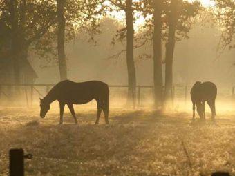Pferdeweide_morgens